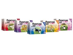TRI-ACT CANI 2-5KG - 6 PIPETTE - FRONTLINE