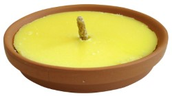 CITRONELLA IN PADELLA DI TERRACOTTA - DIAMETRO CM.17